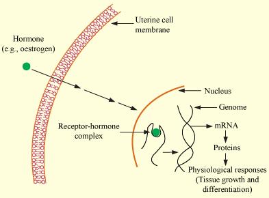 enzyme defination hindi