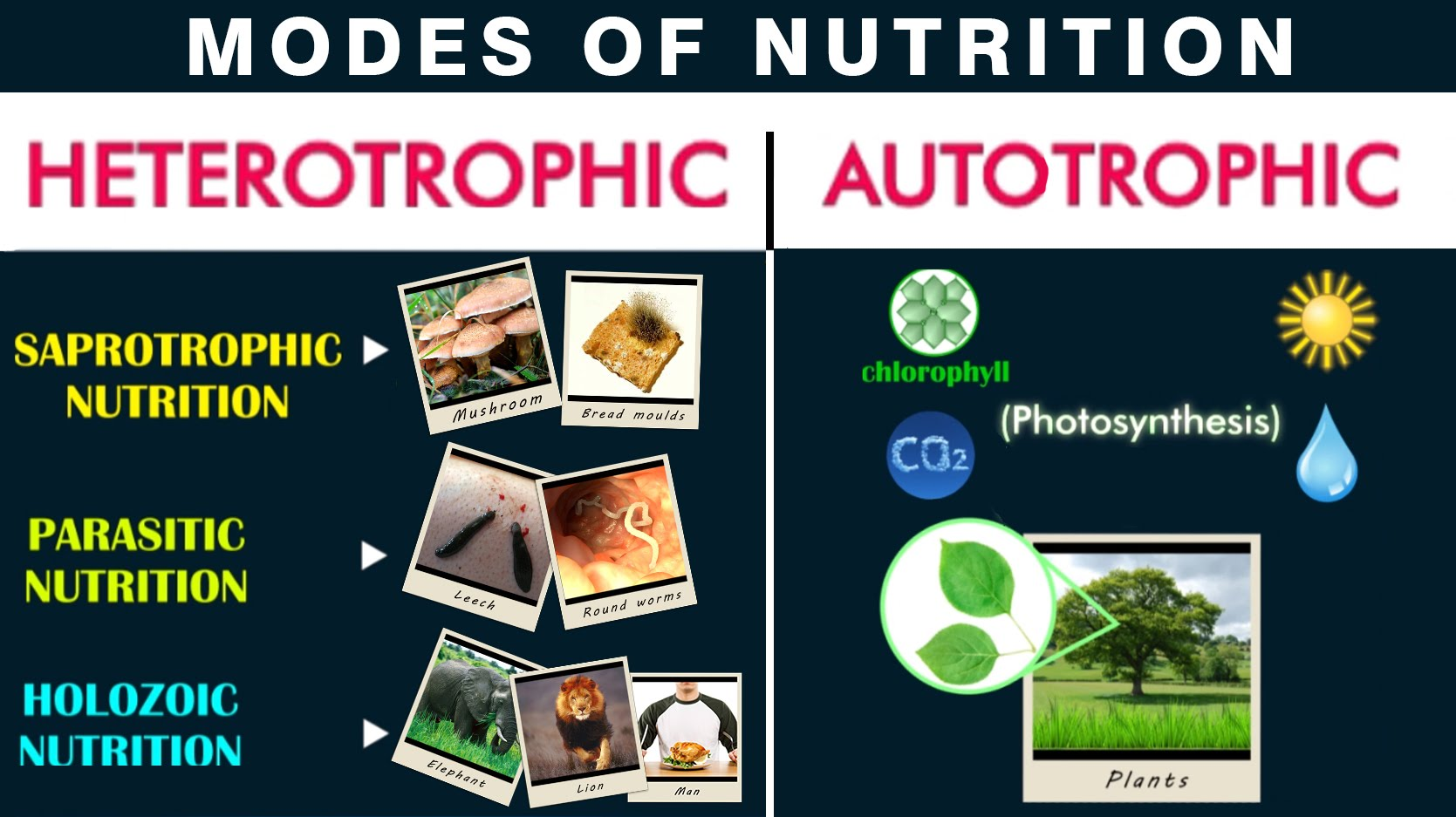 Nutrition and mode of nutrition - Online Biology Notes