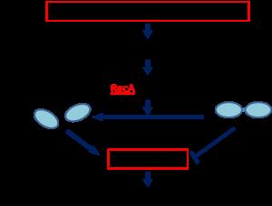 Dna damage response and repair mechanisms biology essay