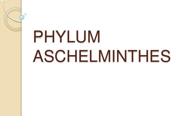 nemathelminthes phylum