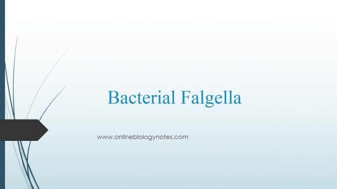 Bacterial Flagella: structure, types and function - Online