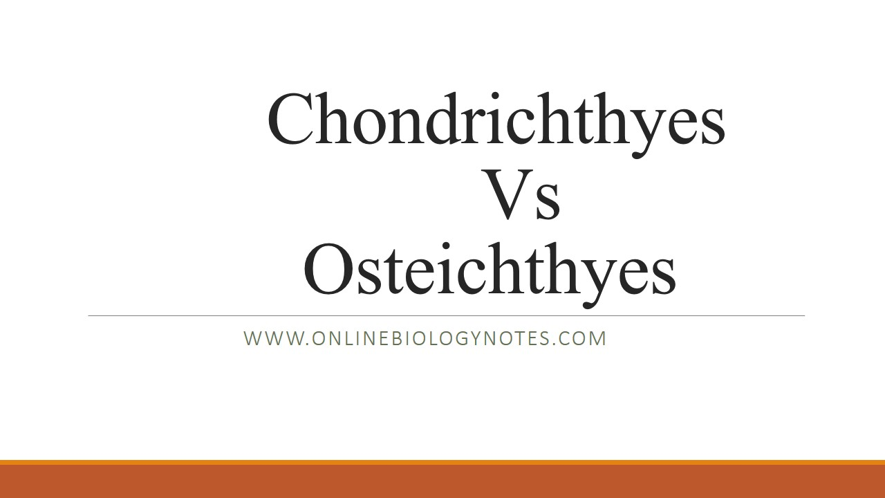 Difference between Chondrichthyes (cartilaginous fish) and ...
