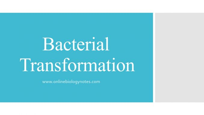 Bacterial Transformation - Online Biology Notes