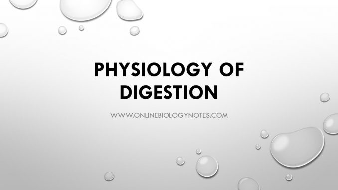 Physiology of digestion - Online Biology Notes