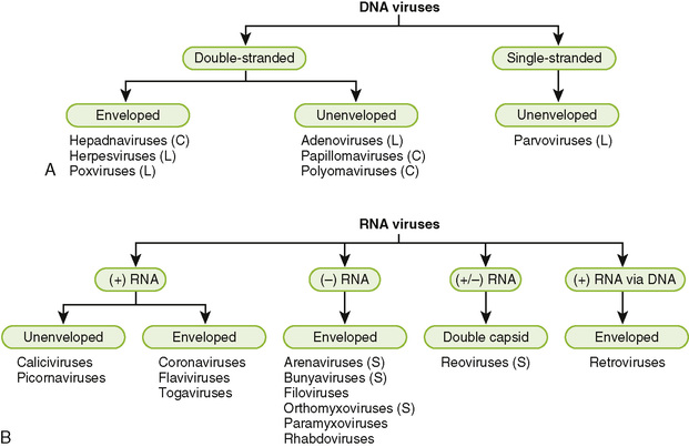 Mode of transmission of viral diseases-3519
