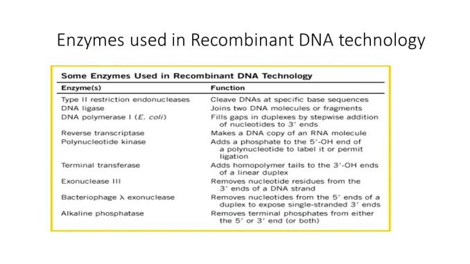 Enzymes used in recombinant DNA technology - Online Biology Notes