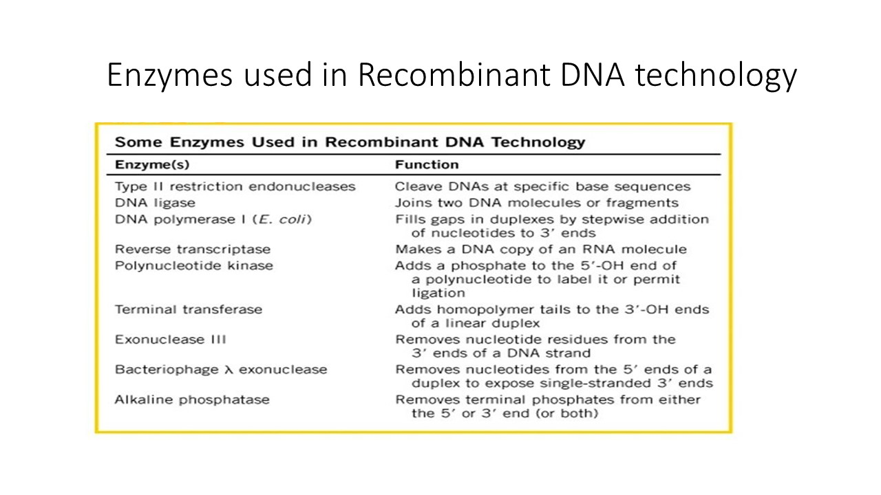 enzymes used in recombinant dna technology -