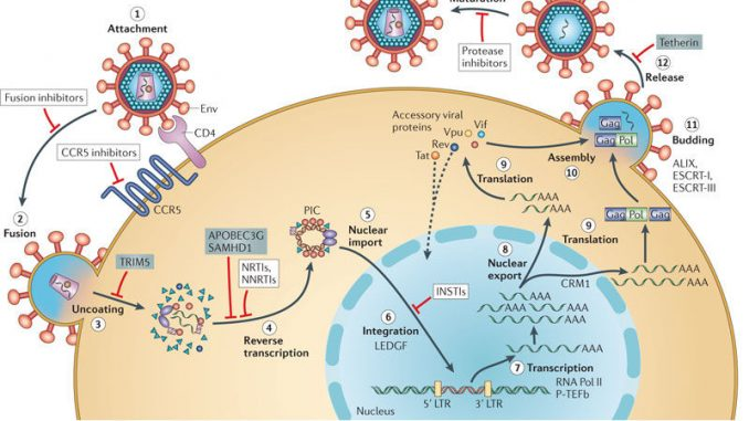 Hivaids Replication Pathogenesis Clinical Manifestation And Lab