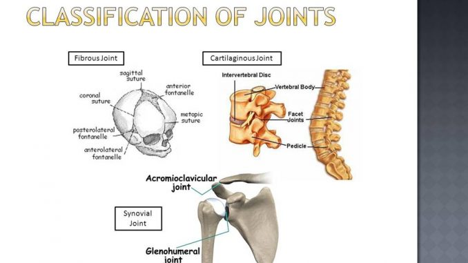 Classification Of Joints Online Biology Notes Definition of synchondrosis in the definitions.net dictionary. classification of joints online