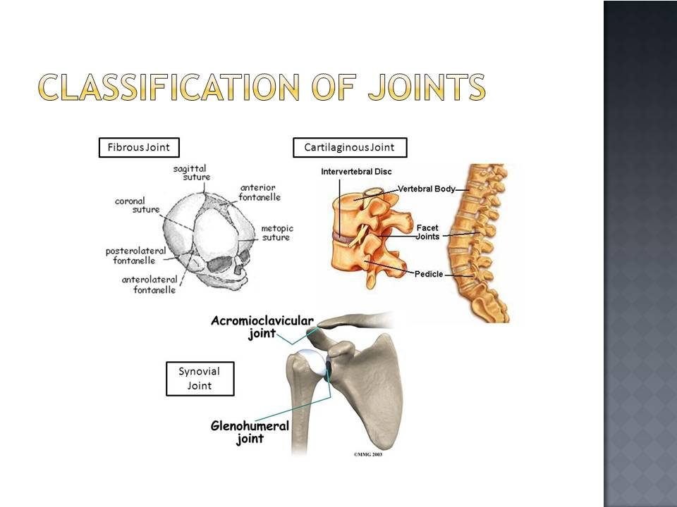 Classification Of Joints Online Biology Notes Synchondroses (primary cartilaginous) and symphyses (secondary these joints are immovable (synarthrosis). classification of joints online