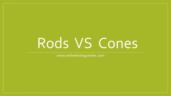 Difference between rods and cones -