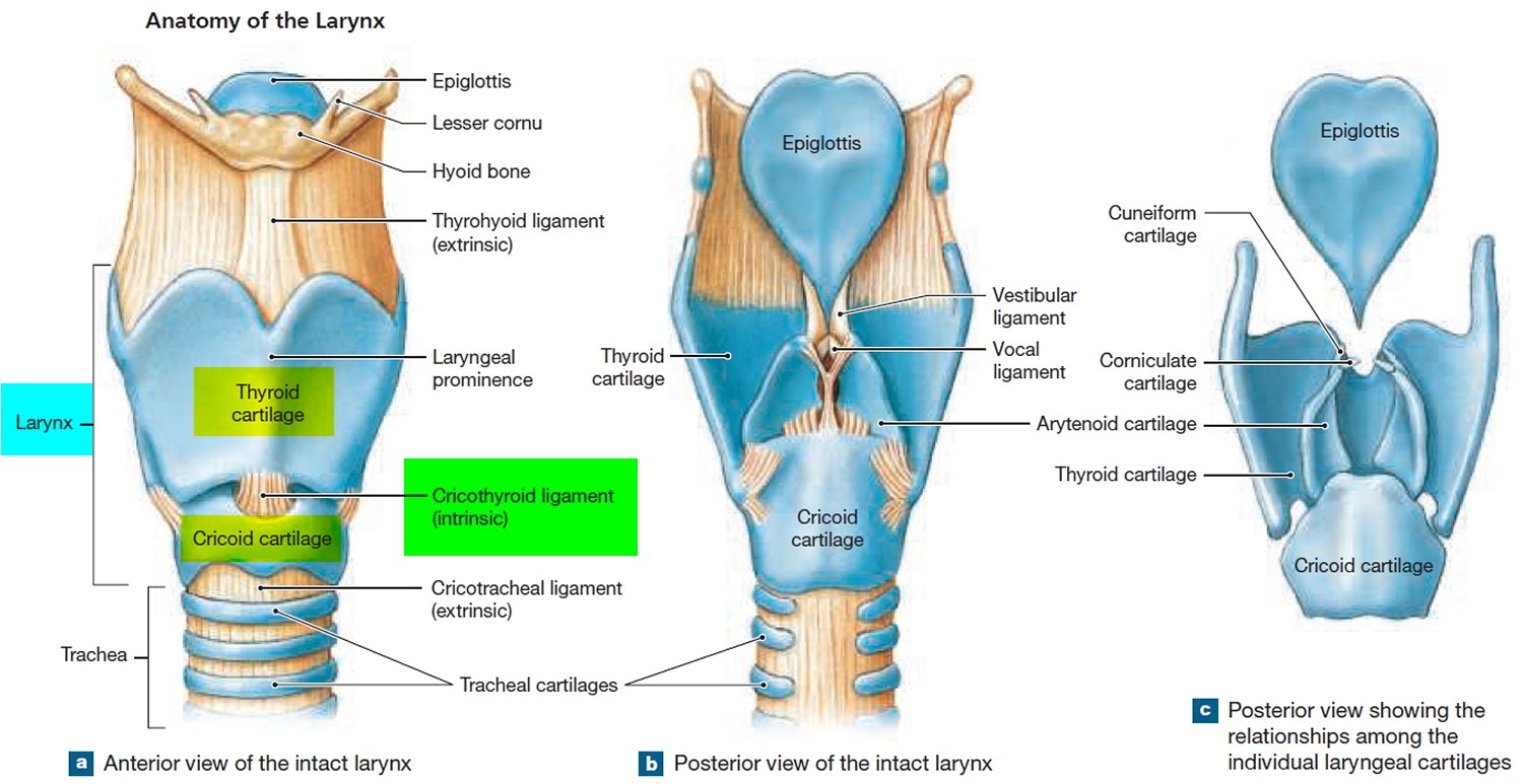 Respiration, types of respiration and anatomy of Human