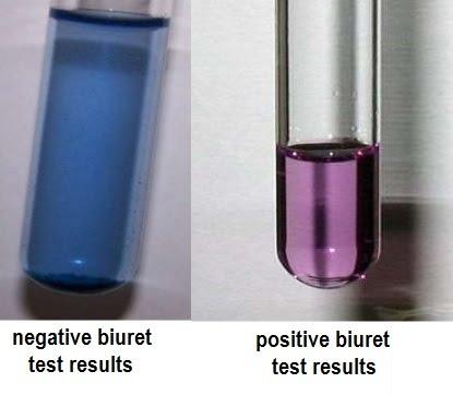 Image result for biuret test