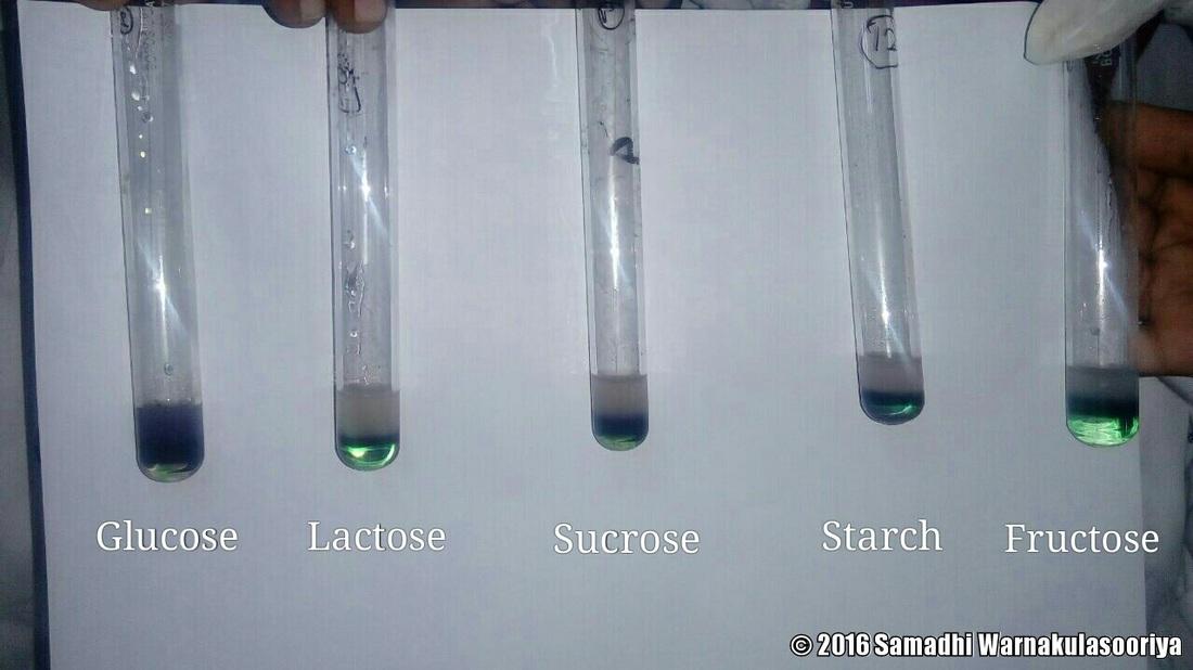 molisch test for lipids