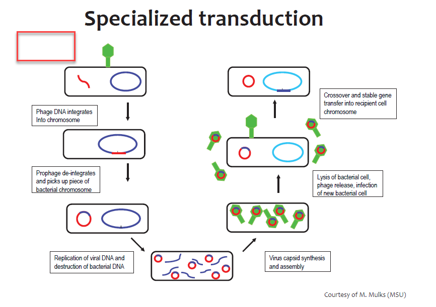 Transduction Generalized And Specialized Transduction