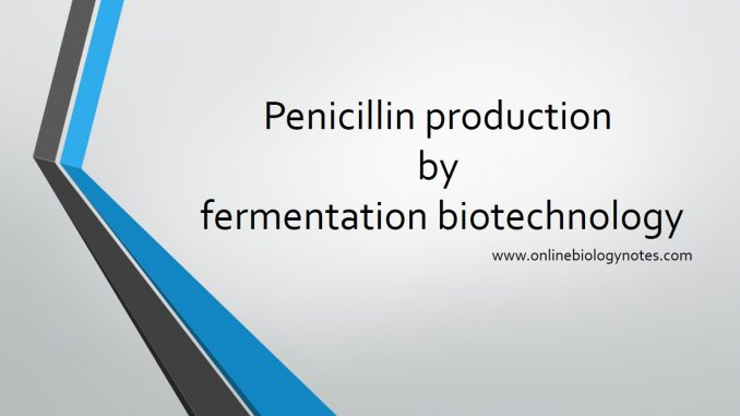 Penicillin Production Commercially By Fermentation