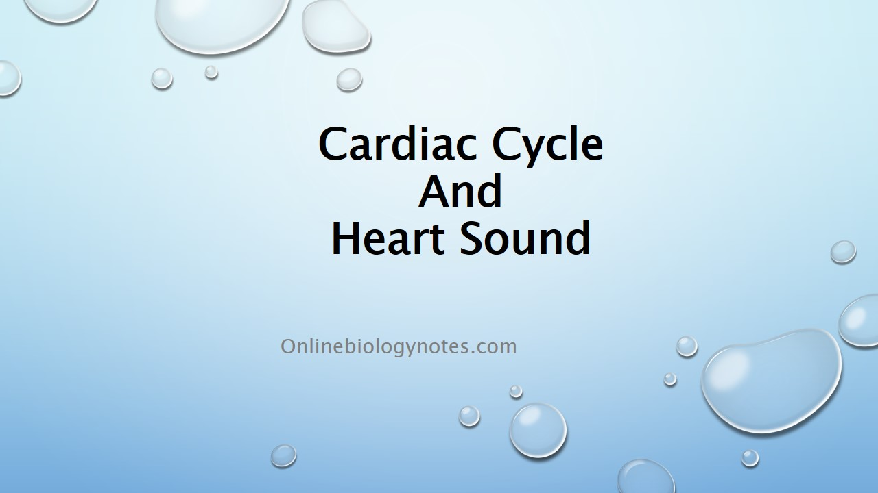 Cardiac cycle and heart sound - Online Biology Notes