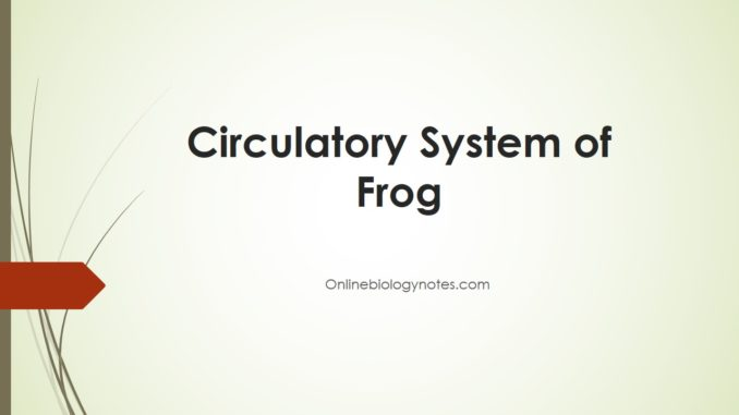 Circulatory system of Frog - Online Biology Notes